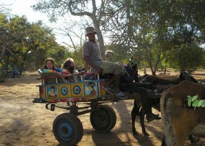 Balade en charrette de zébu