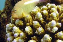 poisson-aquatique