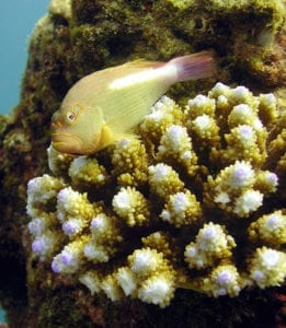 Poisson aquatique