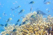 poisson-mer-sud-madagascar