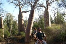 promenade-cheval-foret-baobab