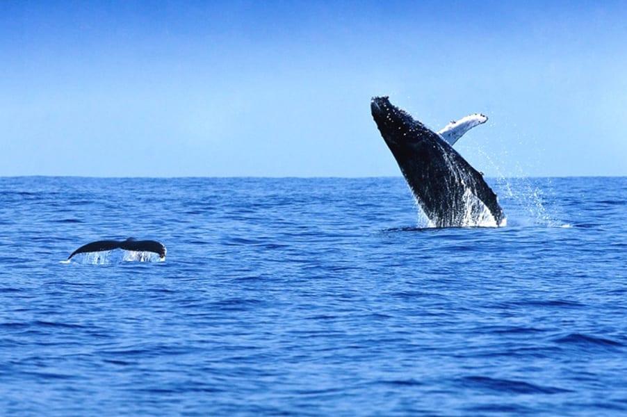Sorties des baleines - Activités et nature d'exception