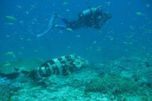 Club plongée sous marine